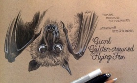 Charon Flying Fox