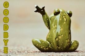 frog goodbye